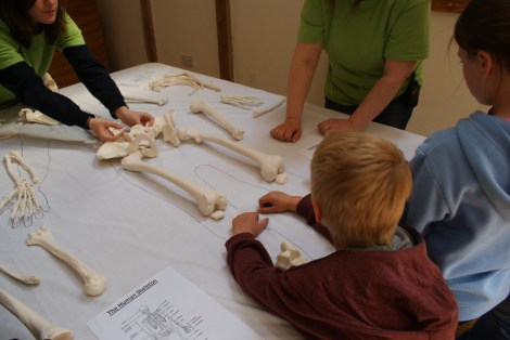 Osteology - What can skeletons tell us about the past?