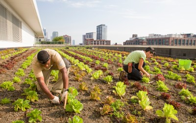 Partner Spotlight: Windy City Harvest