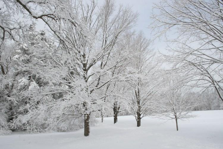 snowy-feb-day-in-maudsley-016