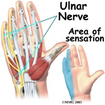 Shibari safety, anatomy of the hand. Ulnar nerve