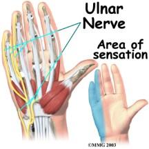 Shibari safety, anatomy of the hand. Ulnar nerve