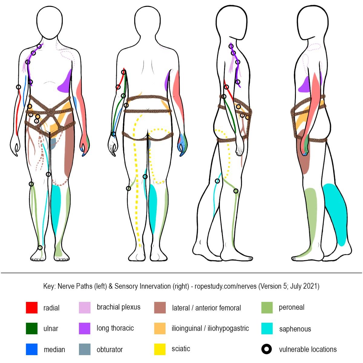 Nerves Hip Harness