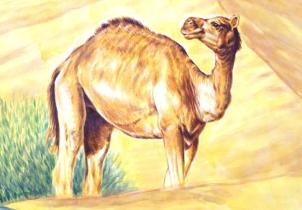 Rory McCann hand painted mural wildlife art school painting (67)