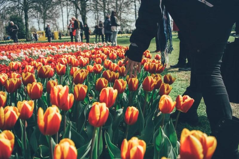 visit-amsterdam-tulips-park-min
