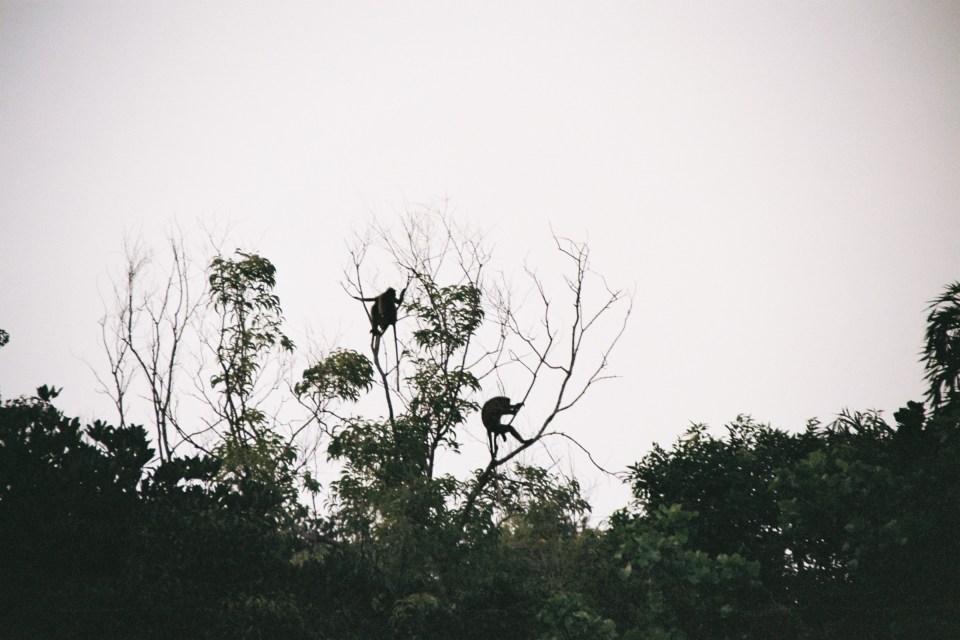 kudlee beach monkeys