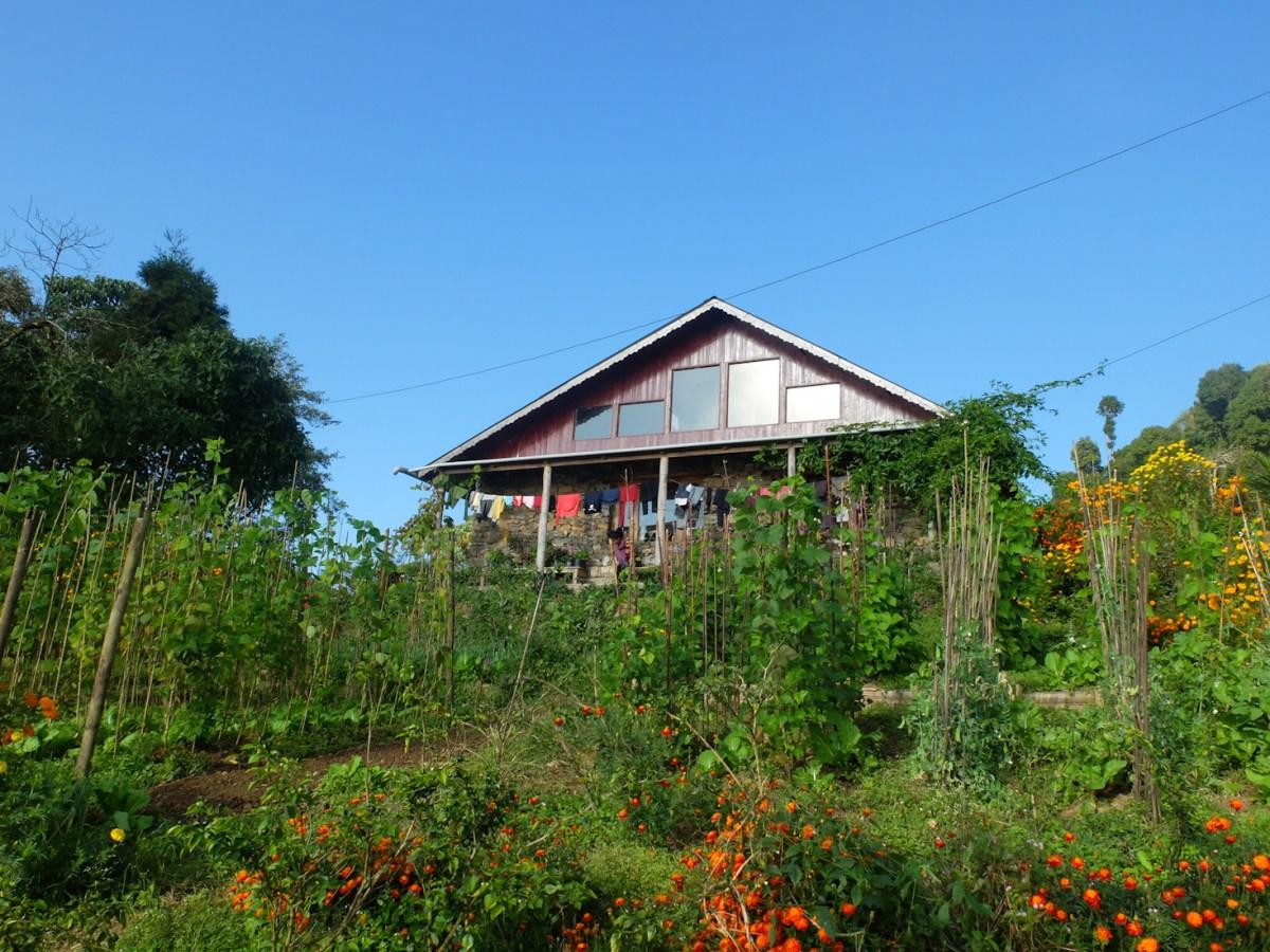 Volontariat au Nepal : la vie à la ferme