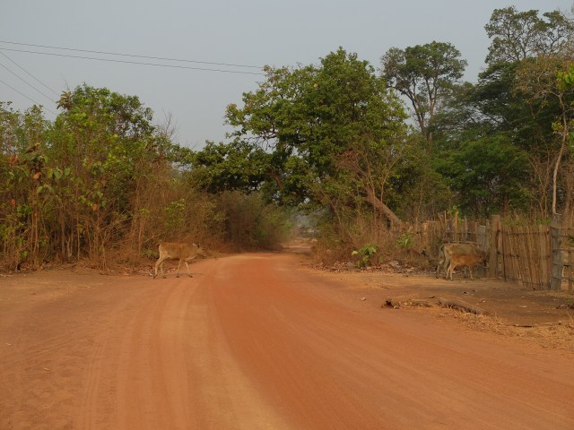 Plateau bolaven laos-3