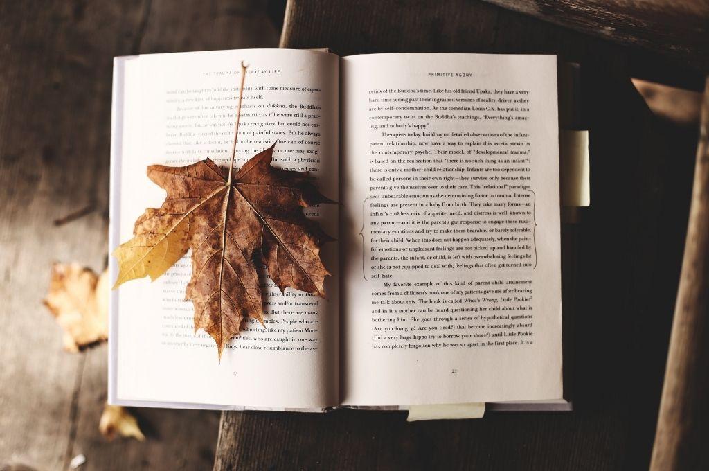 RosaMag-Bücher-im-Herbst