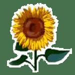 sunflower200px