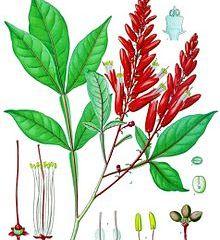 Polyphenols offer promise for rosacea symptoms
