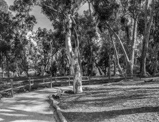 rocha_19feb17_hosp-grove-park20001