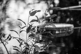 rocha_19feb17_hosp-grove-park60001