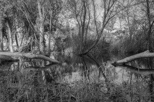 rocha_19feb17_hosp-grove-park70001