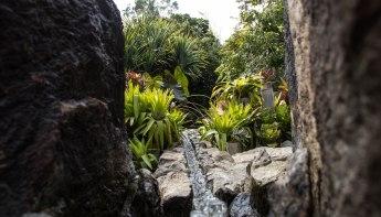Rocha_4March17_Bontantic Garden 130001