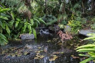 Rocha_4March17_Bontantic Garden 240001