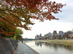 koyo-kyoto-kamogawa-rosalys2014-3