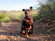Monty Carlo loves hiking...