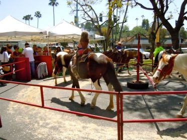 children get to ride real ponies on the merry-go-round