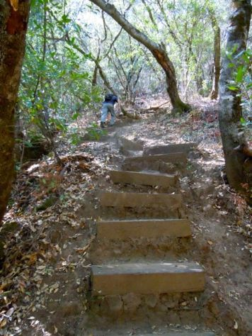 steep stairs up to the Blue-ridge trail