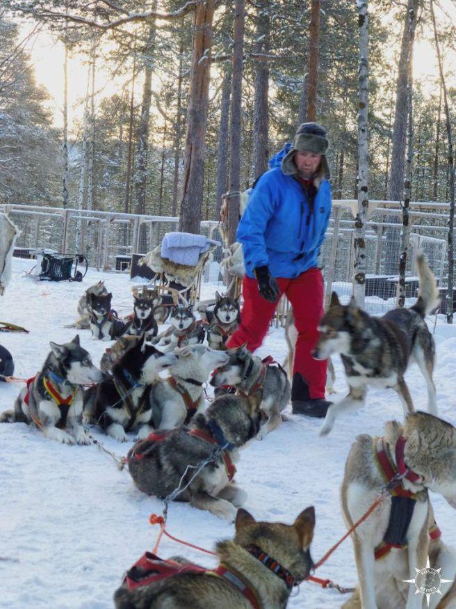 Pekka und seine Hunde