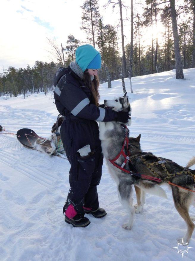 inari-husky-schlittenhunde-finnland