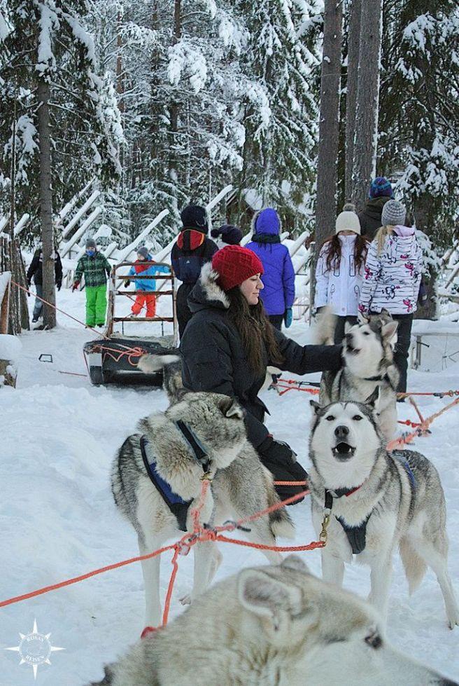 schlittenhunde-arktis-finnland-hundeschlitten