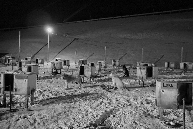 Rosas Reisen • Spitzbergen • Norwegen • Schlitttenhunde