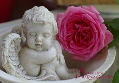 La Rose Cherie