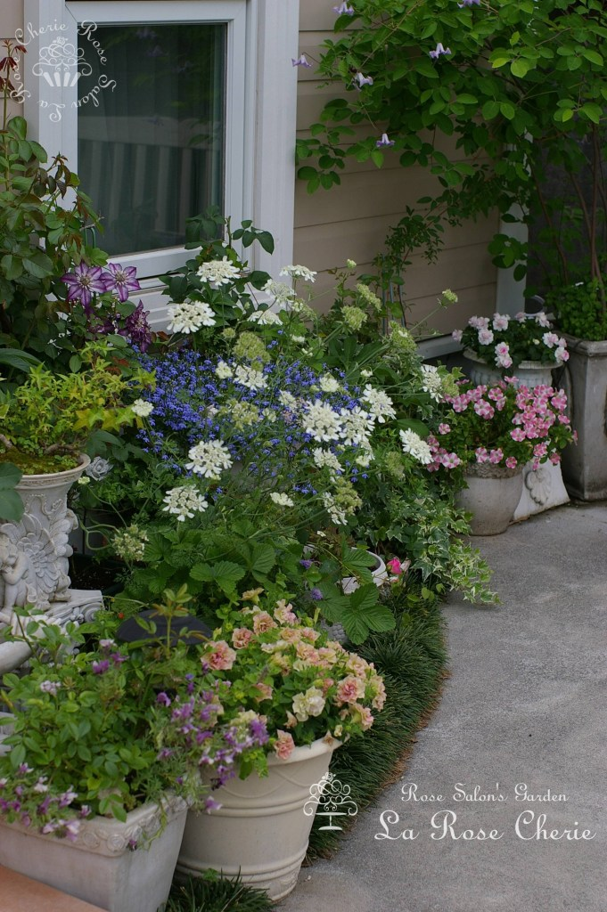 Rose Salon's Garden