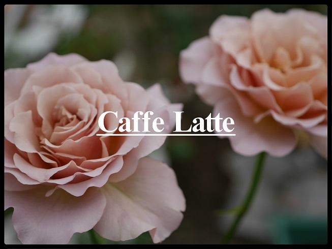 当サイトのコンテンツ「苦みと甘みが溶け込む花色まろやかなバラ[カフェラテ]の栽培実感」用のアイキャッチ画像