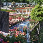 荒牧バラ公園|六甲連山の麓のバラ園を88枚の写真で散策する|兵庫県伊丹市