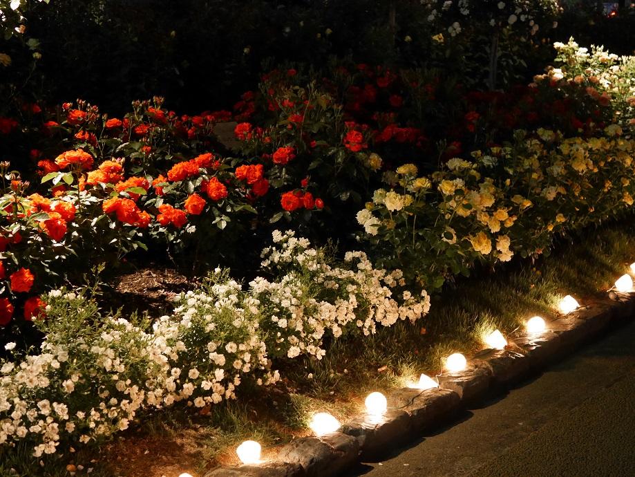 福山ばら公園の夜間ライトアップイベント「ROSE NIGHT~ライトアップ・イルミネーション~」の様子を撮影した写真。