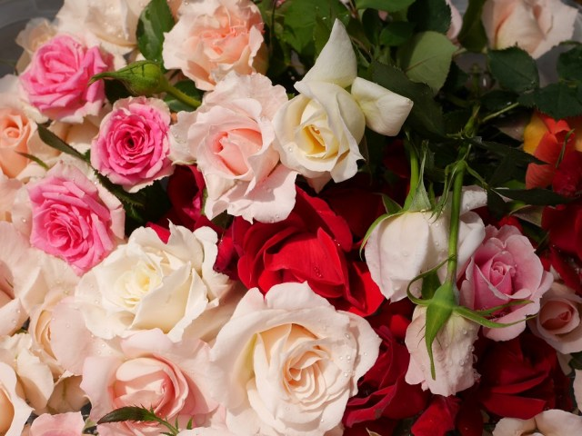 色とりどりの様々なバラの花を画面にぎゅっと集めた美麗な写真。