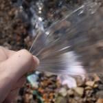 知っておきたい地植えのバラの水やり|「水量」と「頻度」