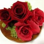 [超基礎]バラ入門|バラ栽培の最初の最初に知っておいてほしいこと