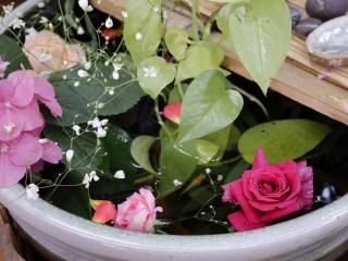 水をはった陶器製の水鉢のなかに植物とバラを浮かせている写真。