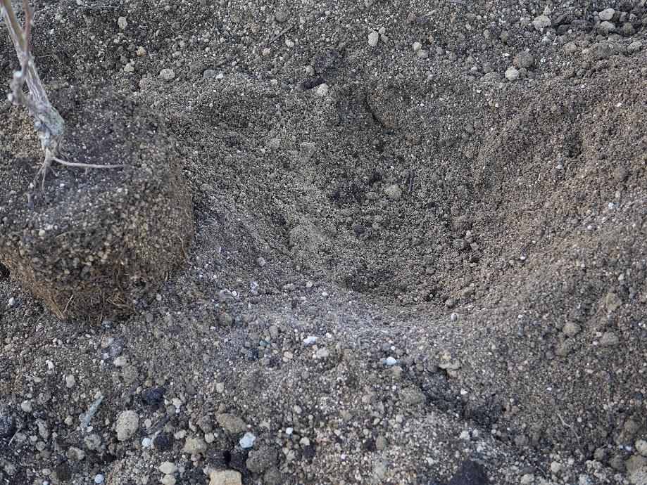 粘土質の土壌に真砂土や牛糞たい肥を混ぜこんで土壌を改良した土の写真。