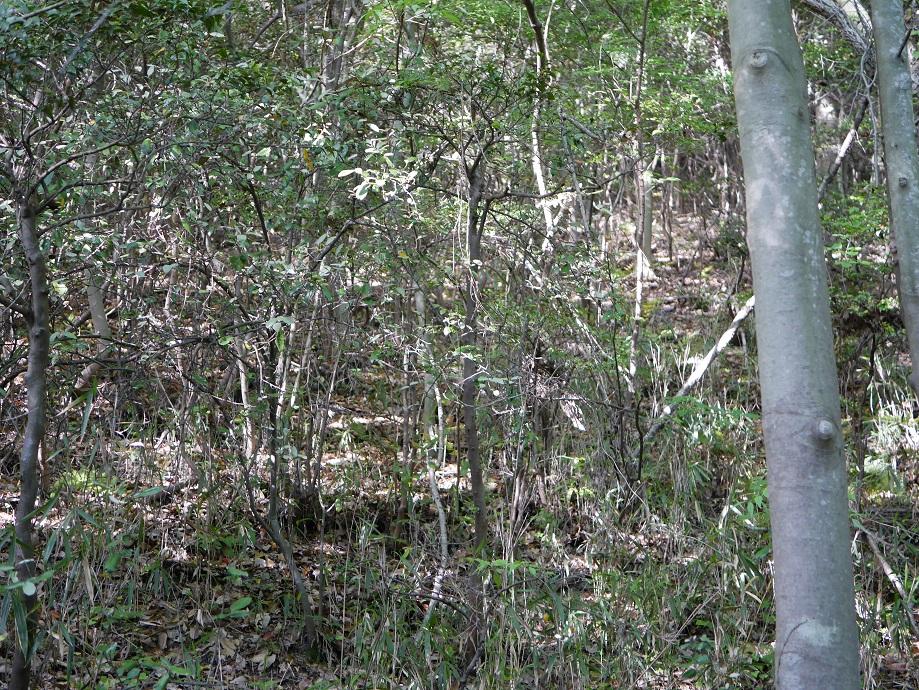 木々が生い茂る山の様子。