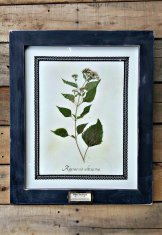 Cadre botanic vintage