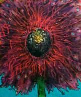 Winter Flower #3