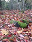 Nature: Forest Floor