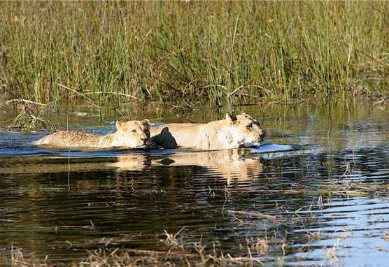 tours-in-botswana-4
