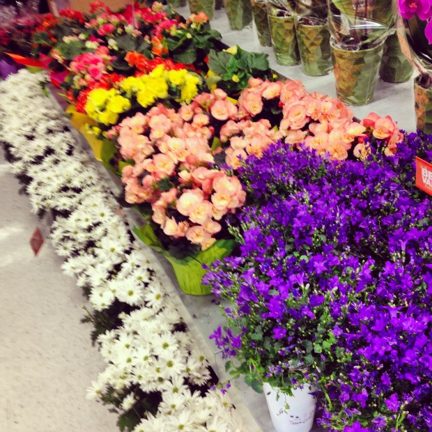 supermarket flowers, spring flowers for the home, home flowers, fresh flowers