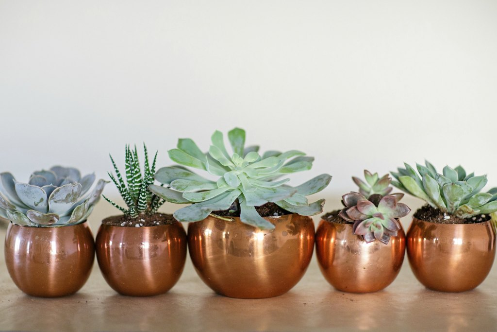 tips-for-planting-succulents-bourbon-rose-floral-design-rose-city-style-guide-canadian-lifestyle-blog-10