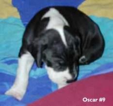 Oscar dane pup