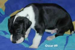 oscar 3 weeks