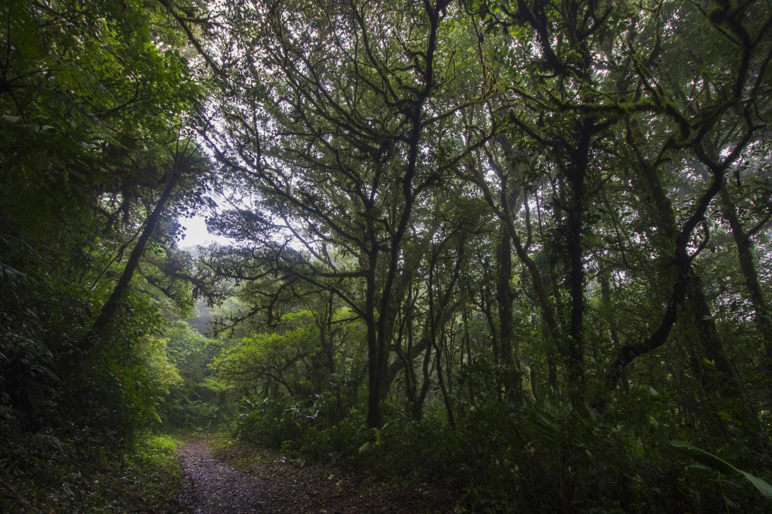 Sur le Sendero Bosque Nuboso