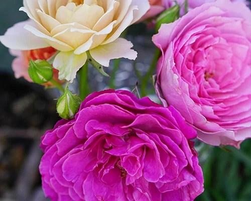 flower-remedy
