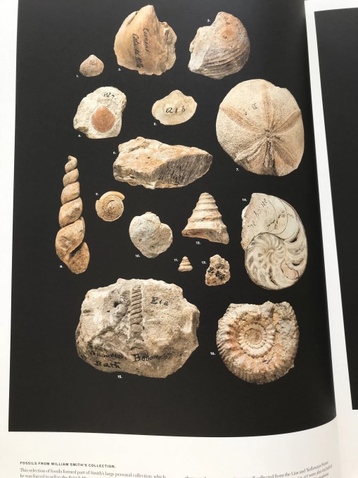 A photograph of some of the fossils from Smith's collection