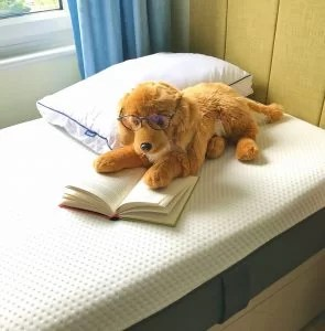 A picture of a single emma mattress on a divan bed. A toy dog is reclined on top, the dog is wearing glasses and appears to be reading a book.